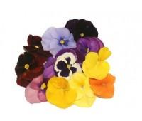 """Квіти їстивні """"Віола"""" (в упаковці 10 шт )"""